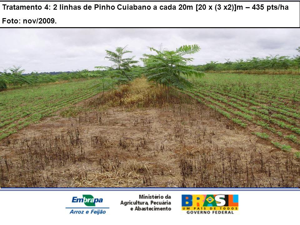 Tratamento 4: 2 linhas de Pinho Cuiabano a cada 20m [20 x (3 x2)]m – 435 pts/ha